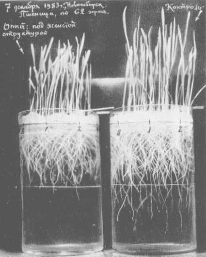 La  Chitine  . Ondes  scalaires  et  Anti gravitation Grebcroissplant