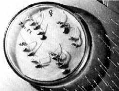 la machine volante de grebennikov Grebdeviationracine